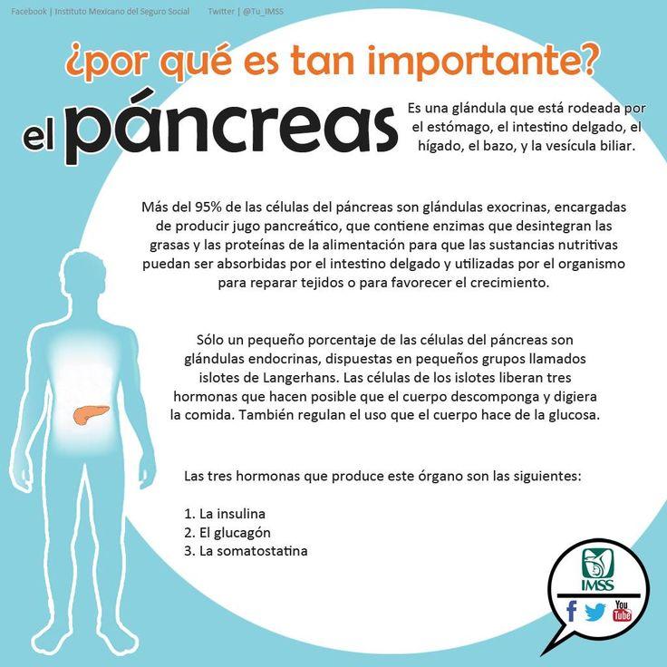 La importancia del páncreas   Nutrición   Pinterest
