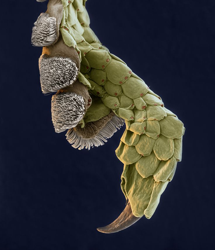 Leg of a Gecko-Photos of the Amazing and Gruesome World Under a Microscope