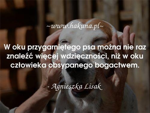 W oku przygarniętego psa można nie raz znaleźć więcej wdzięczności, niż w oku człowieka obsypanego bogactwem. - Agnieszka Lisak