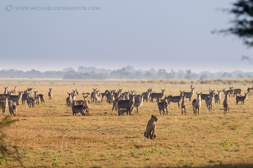 Some days the Gorongosa floodplains look like this... Photo by Michael dos Santos.