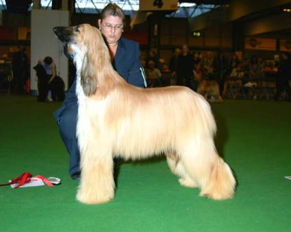 Meme after winning a 1st at Crufts 2002