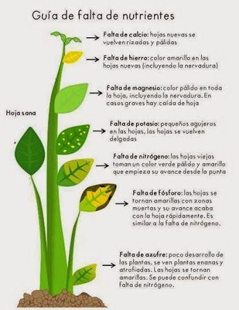 Como determinar la falta de nutrientes en nuestras plantas.