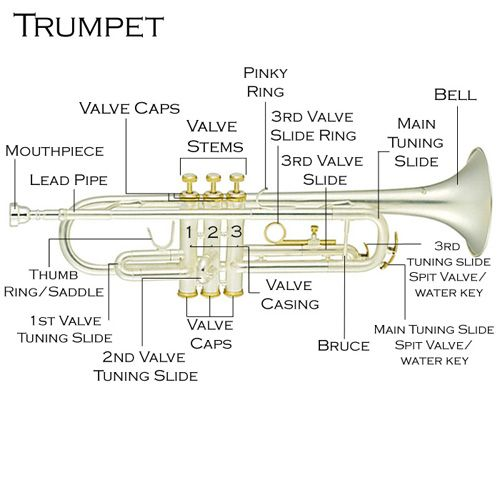 1000+ ideas about Trumpet on Pinterest | Violin, Musical ...trumpet | Cecilio Trumpet Owner's Manual : Cecilio Musical Instruments .