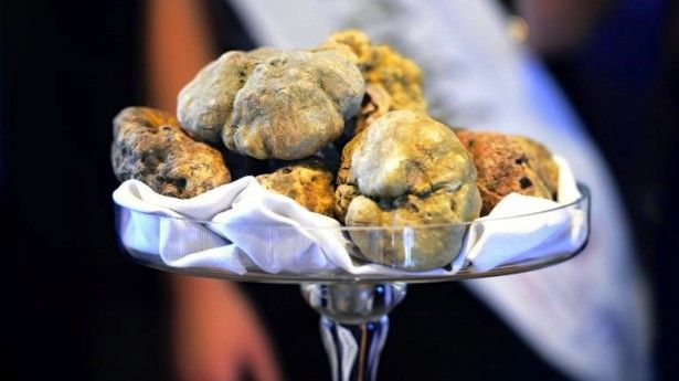 White truffles fetch three times the price of gold at auction