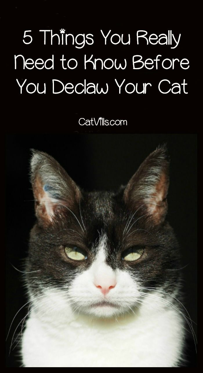 5 Things You Really Need To Know Before You Declaw Your Cat Catvills Cat Training Cats Cat Care