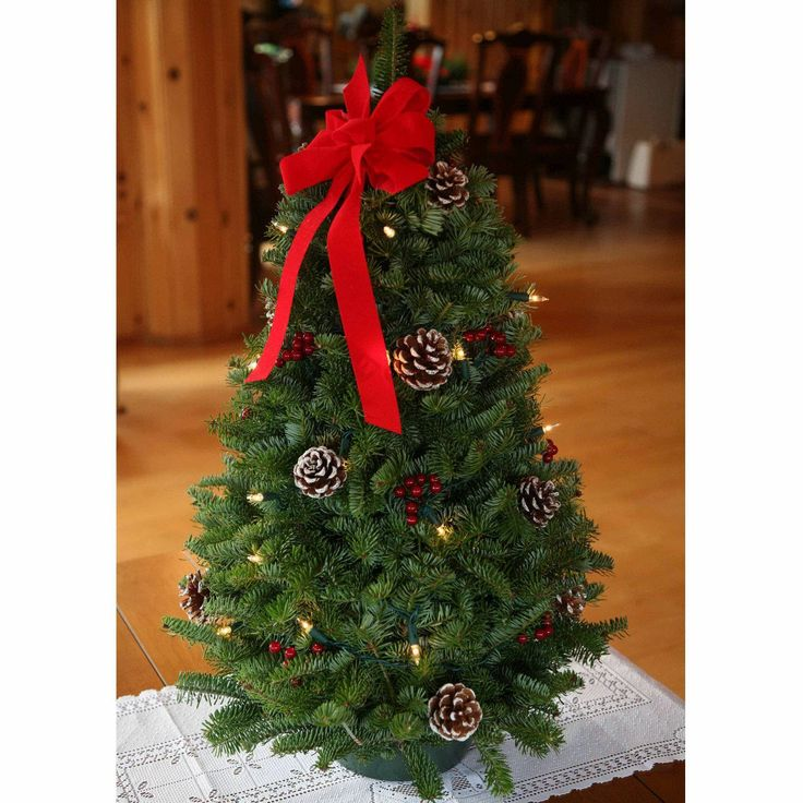 Worcester Christmas Wreath Classic Large Pre-Lit Tabletop Christmas Tree - Store Online for Your Live and Style