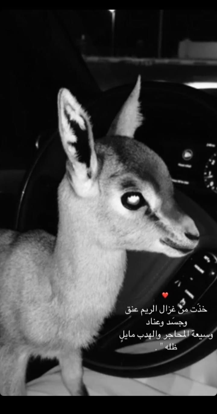 Pin By R A On Quotes Funny Arabic Quotes Animals Funny
