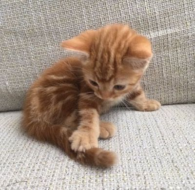 Super Cute Kitten - Click to see loads of great pictures of cats and kittens to brighten your day
