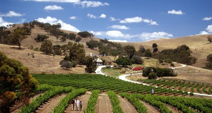 World class wines - vineyards in Australia.