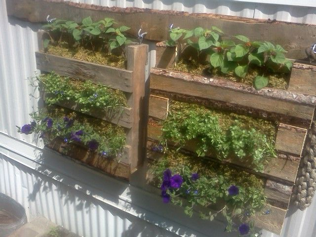 pallet garden hanging on my house