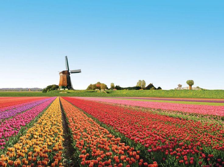 20 lugares onde a natureza não poupou cores:Campos de tulipas, Holanda