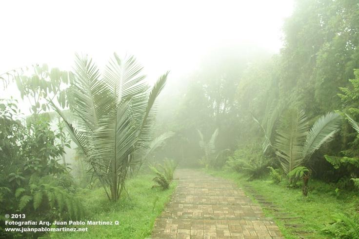 Ingreso al Bosque Andino desde un Parque de Reserva Natural