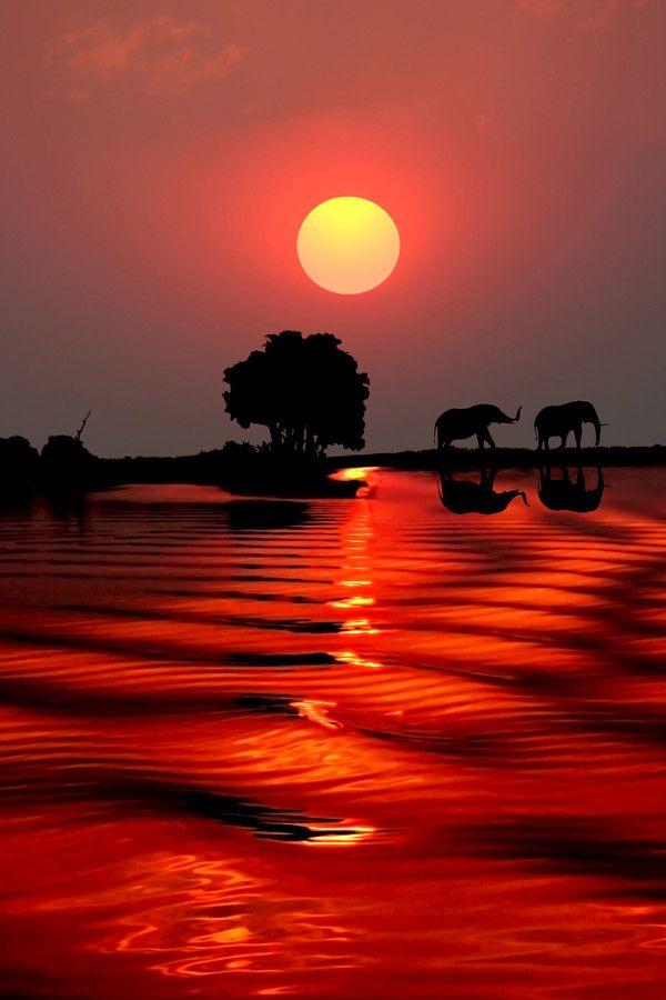 Sunset with elephants - Chobe River, Botswana