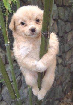 chiot sur un bambou