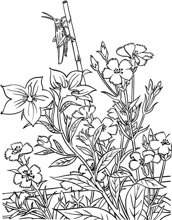 Grasshopper In Garden Coloring Page From Grasshoppers Category Select 27155 Printable Crafts Of Cartoons Nature Animals Bible And Many More