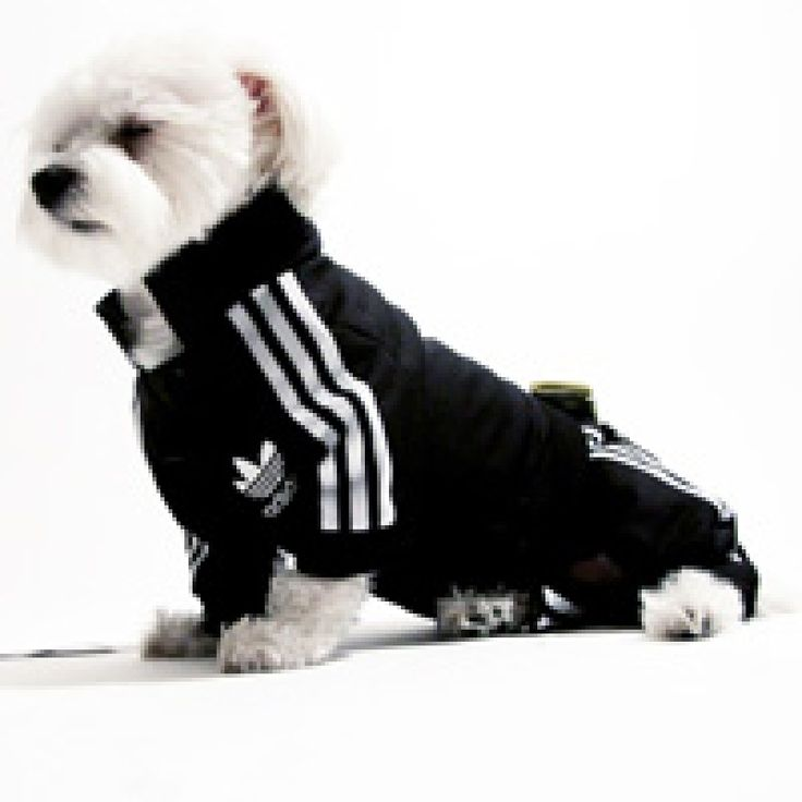 50 best Cute Dog Outfits images on Pinterest | Cute dog ...
