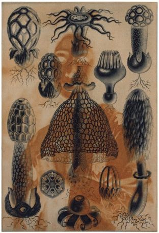 Taidelainaamo - Anita Jensen: Artist Unknown 3, vedos