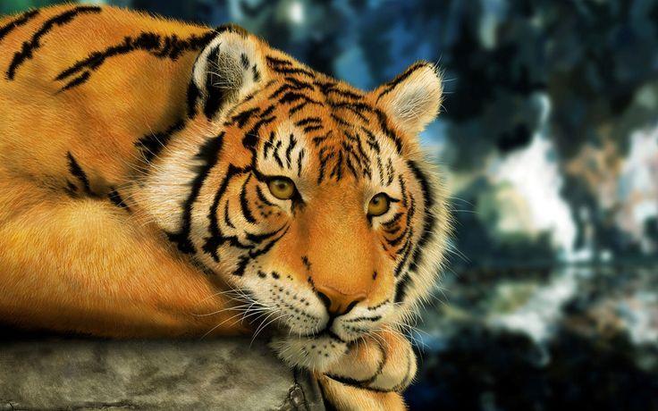 Tiger Art Wallpaper Jpg 960 800: 550 Best Wallpaper HD Images On Pinterest