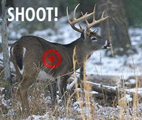 angles to shoot a deer with a bow   Where To Shoot a Deer