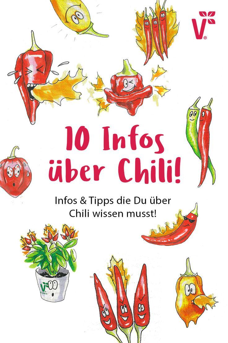 🌶 10 FRAGEN ZU CHILI? HIER DIE ANTWORTEN!🌶 – Volmary – Blumen, Gemüsepflanzen, Obst & Kräuter