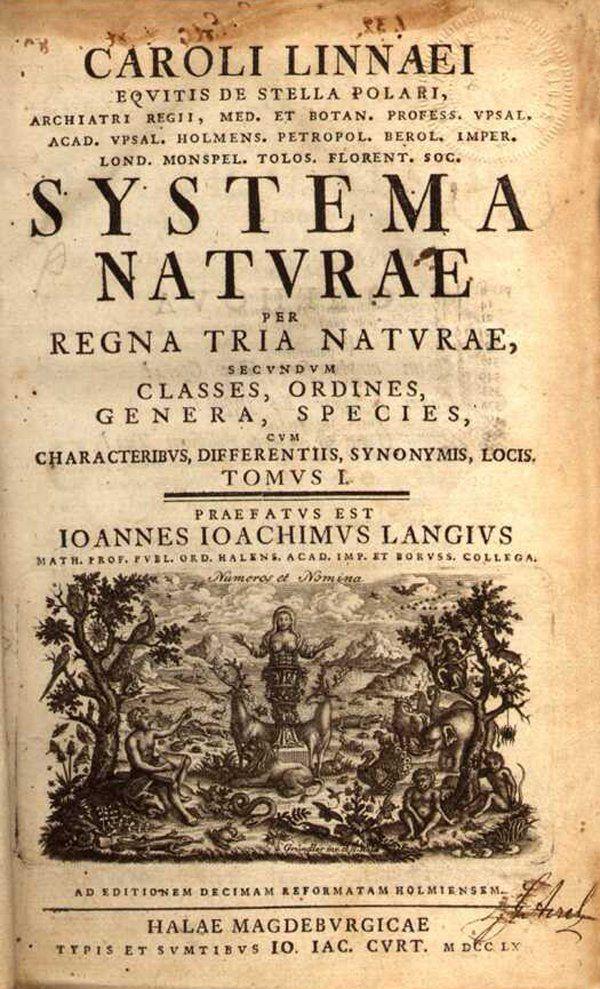 botanica, lineu, naturalista, plantas, sexualidade, taxinomia