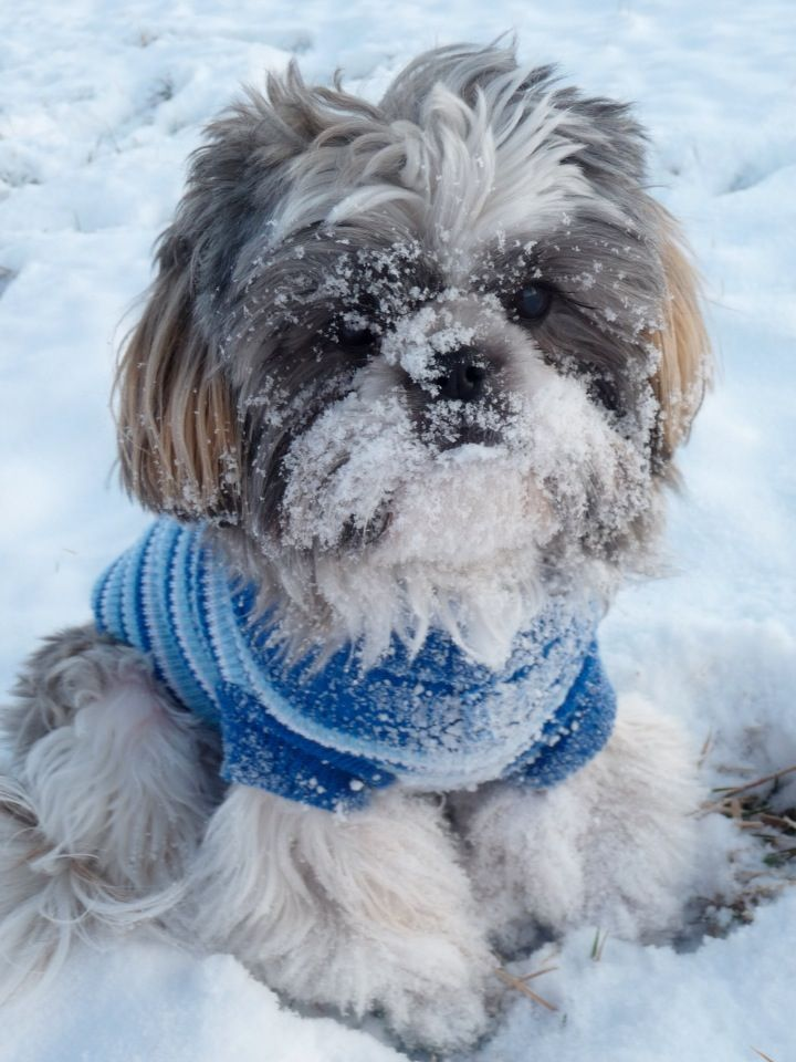 Deuce's first snow! ❄⛄❄