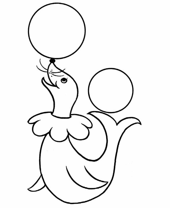 pre k coloring pages circus seal - Pre K Coloring Worksheets