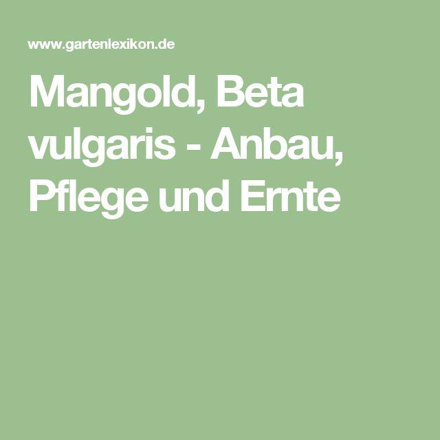 Mangold, Beta vulgaris - Anbau, Pflege und Ernte