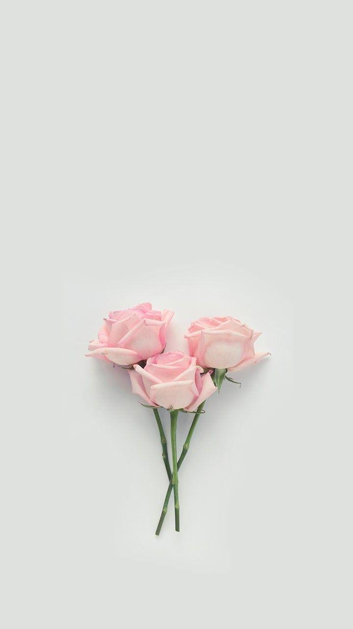 Flower Flowers Rose Roses Floral Florals Aesthetic Floweraesthetic Roseaesthetic Red Blumen Hintergrund Iphone Pastell Hintergrund Blumen Hintergrund