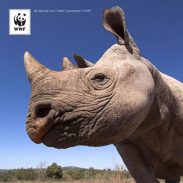 The word for a group of rhinos is a CRASH! Let's crash together for #Endangered Species Day, 15 May.