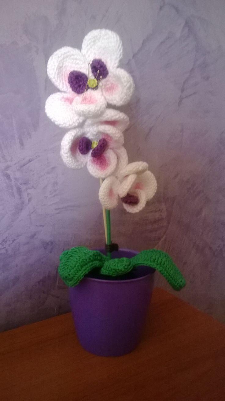 vasetto di orchidee