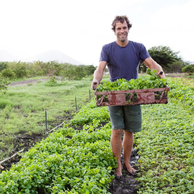 Jack Johnson, Kelly Slater, and Mark Healey Surfing and Fishing in Hawaii - Bon Appétit