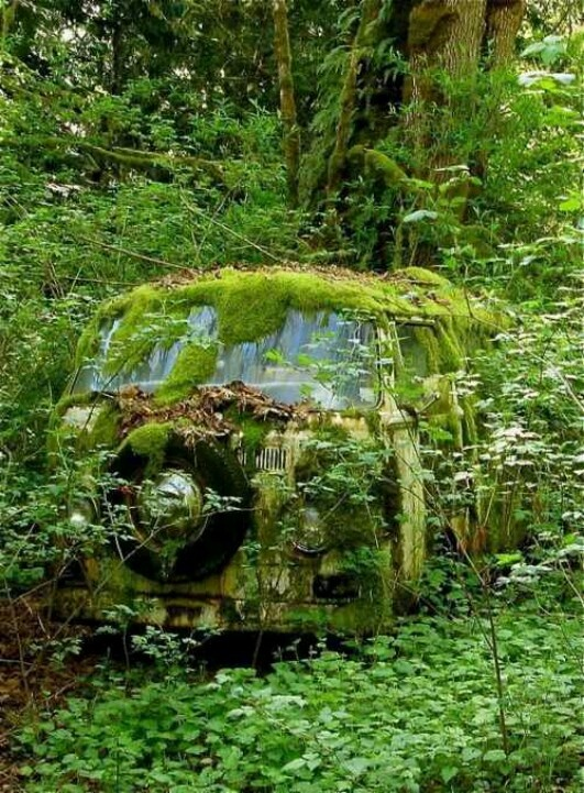 VW Van  to cool to come across this in the forest