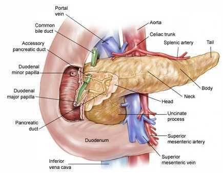 O pâncreas tem contato próximo com veias e artérias importantes. Caso o câncer encoste nestes vasos a cirurgia não pode mais ser feita. Em verde se observa a via biliar, o câncer pode crescer obstruindo a passagem da bile e fazendo o paciente ficar amarelo, condição conhecida com icterícia.