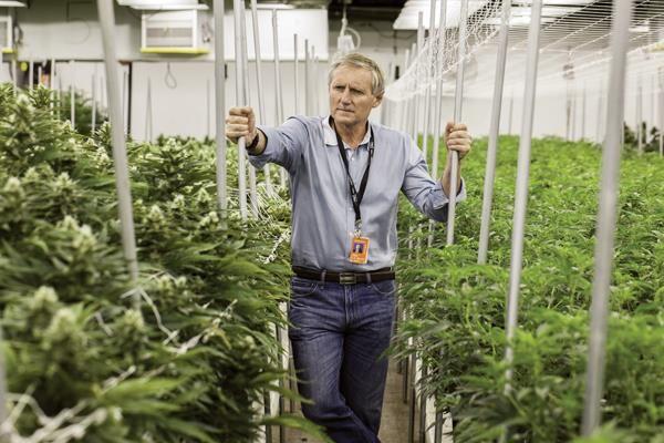 Hollandiában sincs fűből a kerítés. Újabb biztosító jelentette ki, hogy a továbbiakban nem fedezi a gyógyászati kannabisz költségeit.
