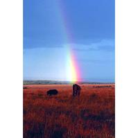 2 - ELEPHANT RAINBOW