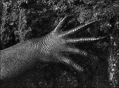 Sebastiao Salgado Sea Iguana Photo Galapagos
