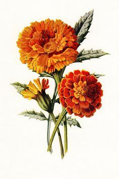 traditional marigold tattoo - Google Search