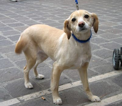 super cute dog in Italy - Blipadee: Animals in Venice!