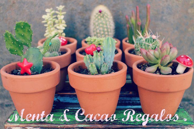Cactus y suculentas .