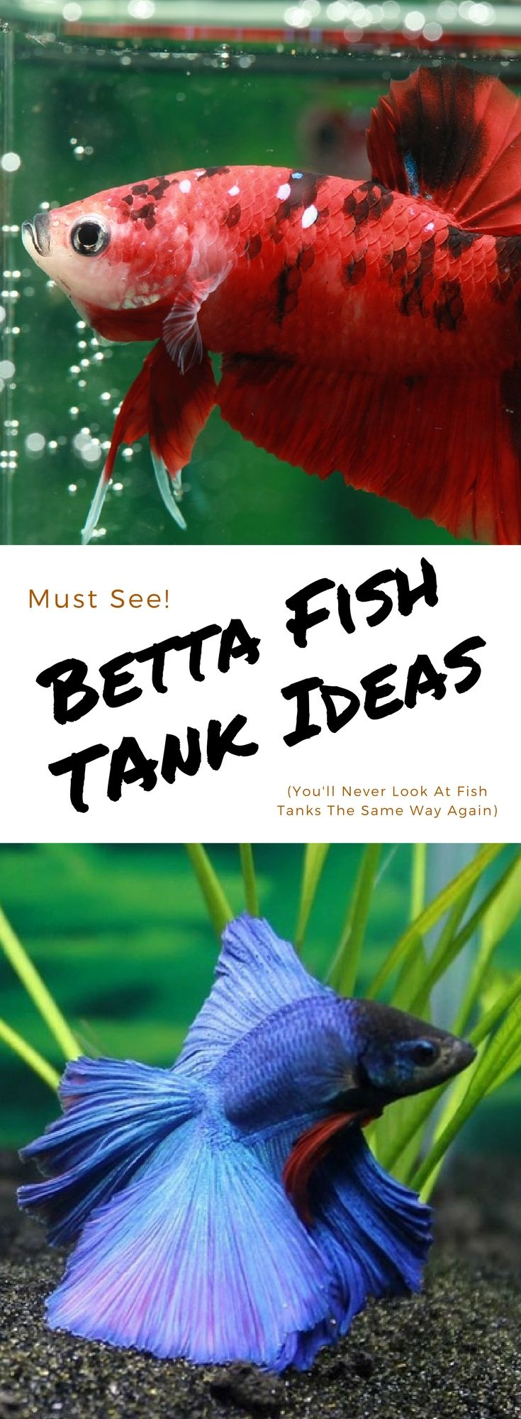 Betta Fish Tanks That Enhance Your Home Decor? Seeing is Believing!