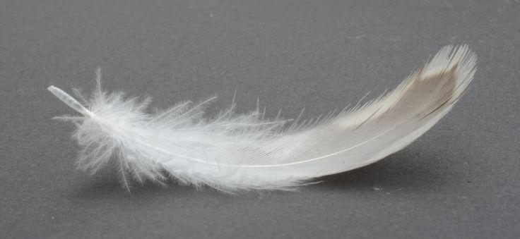 Veer vertegenwoordigt het element lucht maar symboliseert ook het leven symboliek pinterest - Lucht treca veer ...