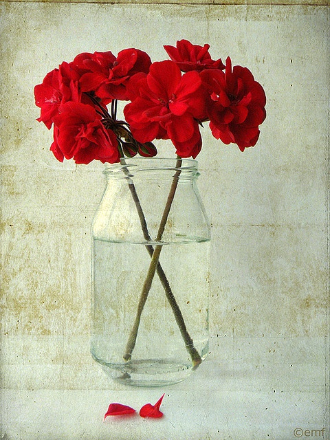 Mason Jar Red Geraniums! . . . here it looks pretty, but when I do something like this, it looks trashy ;)