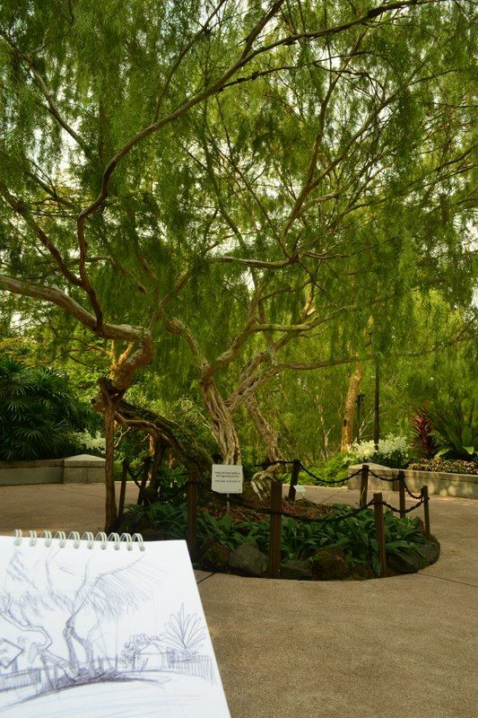 Singapore botanic Park