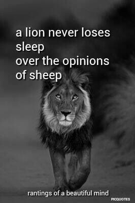 Lion loses no sleep over the opinion of sheep.