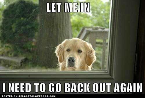 Riptide: The Doors, Laughing, Life, Dogs Memes, Pet, Funny Stuff, So True, Animal, Golden Retriever