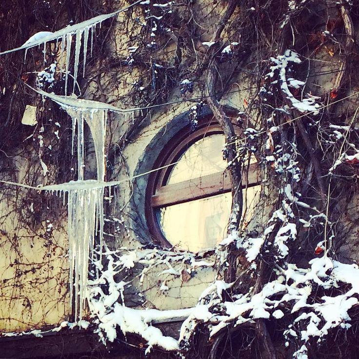 """Frozen. Autocorrectul îmi sugerează """"frizer"""". Cred ca se potrivește. Nu știu de ce.  #frozen #bucharest #igersbucharest #winter #love"""