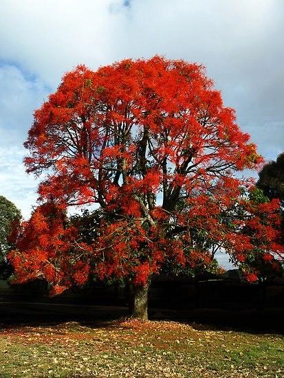 oranje bomen
