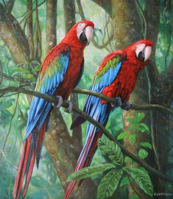AvesExóticasPintadas en Óleo Sobre Lienzo Cuadros Bonitos de AvesExóticas Pinturas al Óleo de Aves AvesExóticasPintura al Óleo Pintur...
