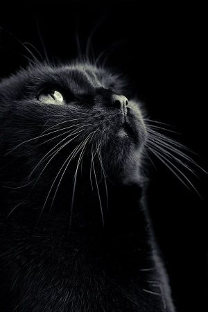 I love this beautiful black cat. He's adorable and sweet, while at the same time being beautiful and mysterious. I love cats, but black cats are the best!